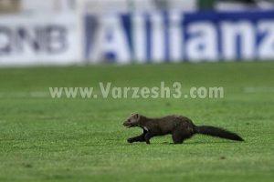 دویدن راسو در ورزشگاه آزادی