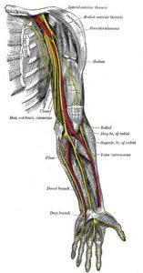 عصب (رنگ زرد)