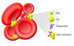 تری گلیسیرید چیست؟ + (تری گلیسیرید بالای ۳۰۰)