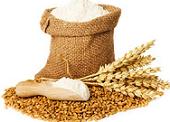 سویق گندم چیست؟