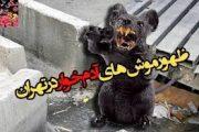 موش های زنده خوار (موش زنده خوار در تهران و زلزله!)