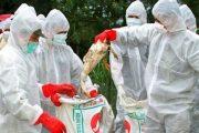 علائم آنفولانزای پرندگان در انسان