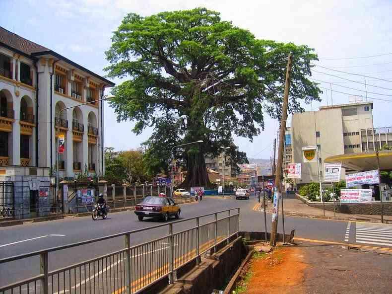 درخت کوتون نماد سیرالئون