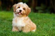 سگ نماد چیست؟