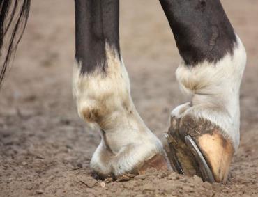 نعل اسب و شانس