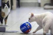 پیش بینی های گربه آرمیتاژ گربه جام جهانی برای بازی ها