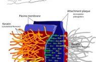 بیماری نادر پمفیگوس چیست؟