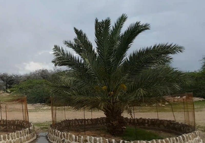 عکس های روستای قدیمی کیش با نام روستای باغو۴