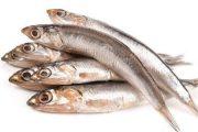 موتو ماهیان یا آنچوی ماهیان چیست؟