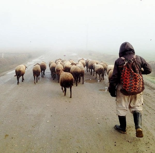 از عکس های گرفته شده توسط ناصر سجادی حسینی
