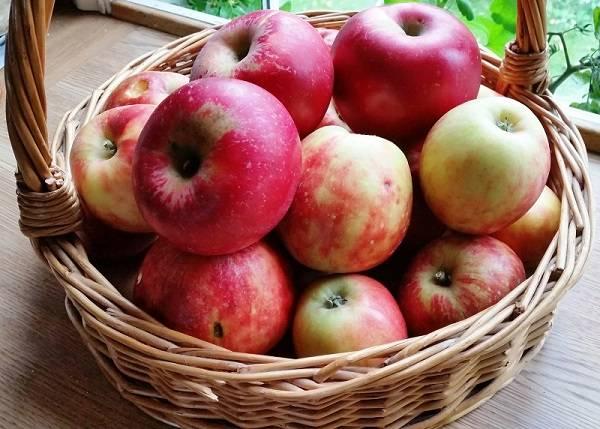 خوردن کدام میوه در اول صبح باعث جلوگیری از خواب الودگی می شود؟