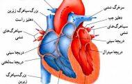 فشار خون ناشی از انقباض کدام قسمت قلب است؟
