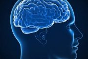 مغز یک انسان بالغ بطور متوسط چقدر وزن دارد؟