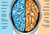ویژگی های نیمکره راست مغز چیست؟