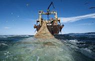صید ترال چیست؟