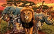 تست حیوان درون شما چیست؟