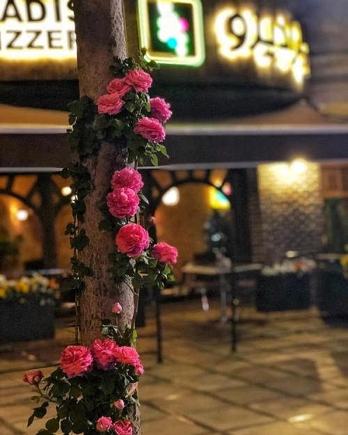 رستوران امیرحسین آرمان بازیگر
