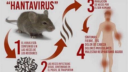 هانتا ویروس چیست؟