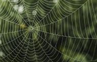 اختراع الهام گرفته از تار عنکبوت چیست؟
